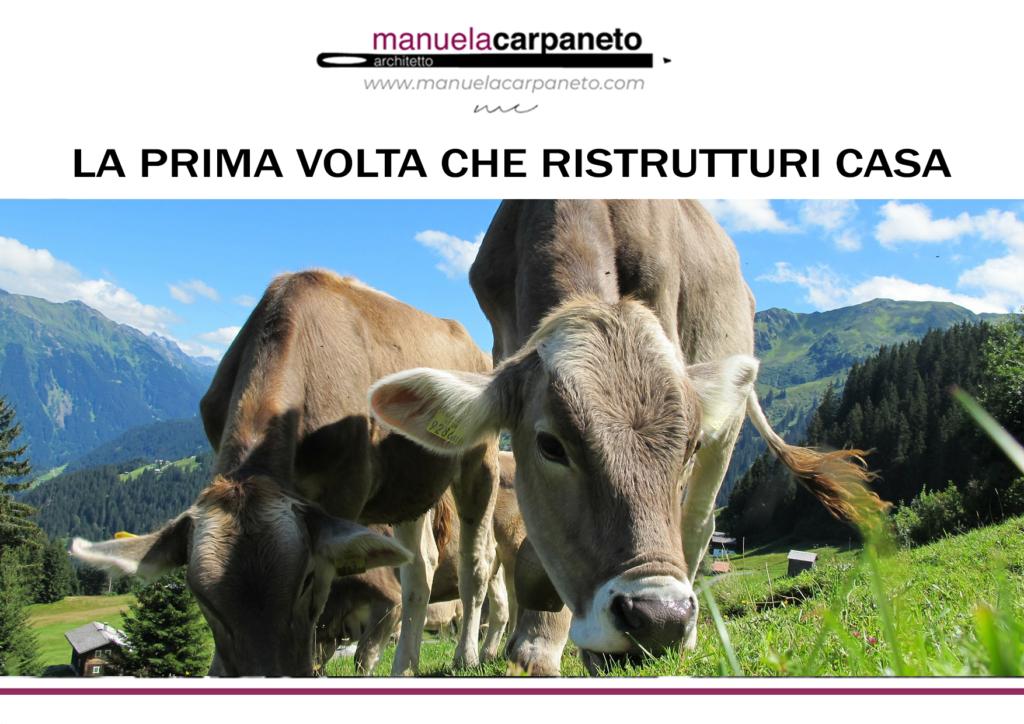 traslocare rispettando l'ambiente mucche